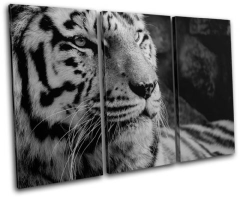 Tiger black and white  Animals - 13-0559(00B)-TR32-LO